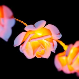 Guirlande lumineuse d'intérieur 15 Roses LED sur 2.10 mètres