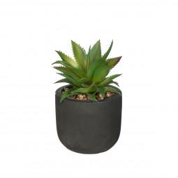 Plante verte dans son pot en ciment