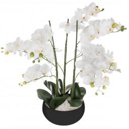 Orchidée pot céramique noir H65