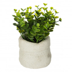 Plante verte sac ciment vent H15