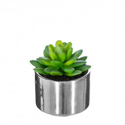 Plante verte pot céramique h.15