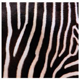 Sticker rouleau animal 45X200 cm