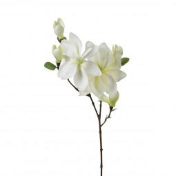 Tige magnolia blanc H83