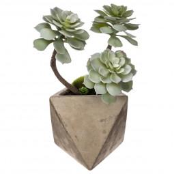 Plante grasse géométrique en pot H30