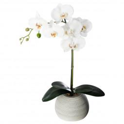 Orchidée real touch ciment H.50
