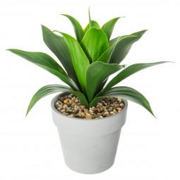 Aloe vera pot en ciment H34