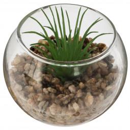 Mini plante dans pot  en verre D 6.5 cm
