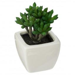 Plante Succulente dans pot en céramique D 5 cm
