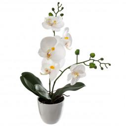 Composition Orchidée dans son pot H 43 cm