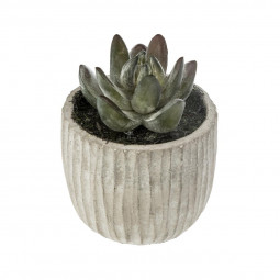 Plante Succulente dans pot en ciment H 9 cm collect moments
