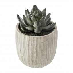 Plante Succulente dans pot en ciment H 12 cm collect moments