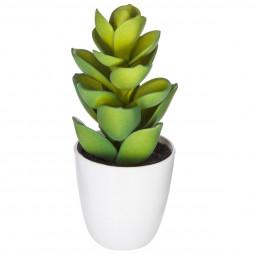 Cactus en pot H18