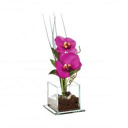 Composition d'orchidées en vase H 25 cm