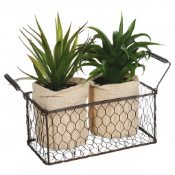 Lot de 2 aloes veras