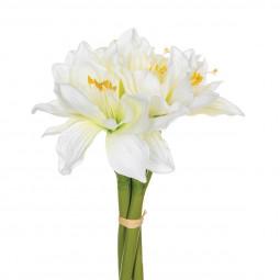 Bouquet de 6 amaryllis H31