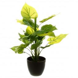 Plante verte H45