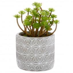 Plante grasse en pot H17