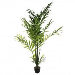 Palmier Areca H230