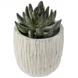 Plante Succulente dans pot en ciment H 14 cm collect moments