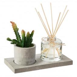 Coffret Senteur Diffuseur avec parfum et bâtons  + Plante grasse sur plateau